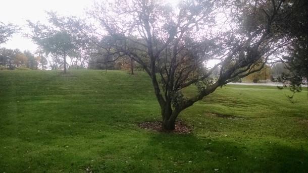 Linwood spring 2014